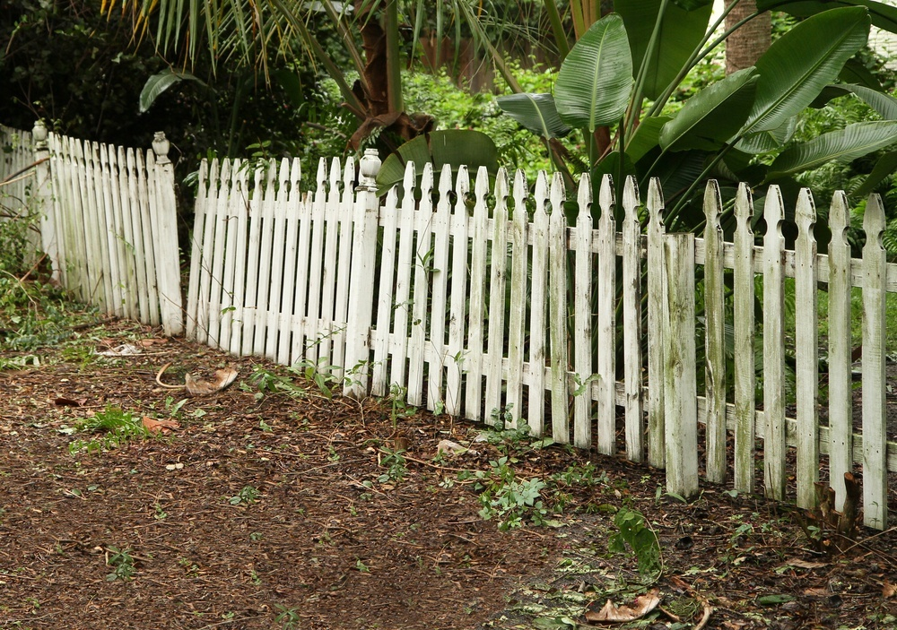 Old fence, exposed timber